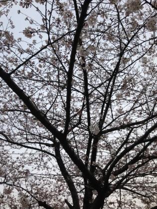 春ですねっ♪保険サロン八田店