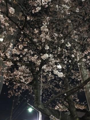 桜満開!!♪保険サロン名古屋植田店