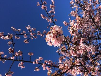 春のママ&ベビーマッサージ♪ 保険サロン刈谷店
